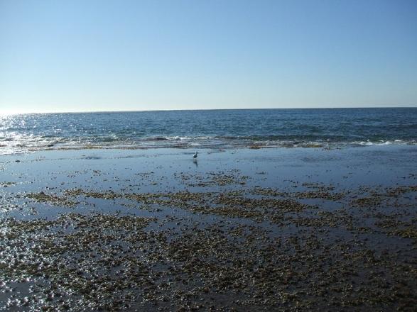 West coast of Exmouth Gulf